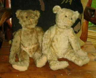 Antique Steiff Teddy Bears Friends Over 100 Years Wow
