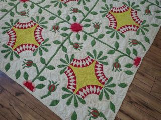 Pattern 19th c Whigs Defeat Twirling Bud Antique QUILT 6
