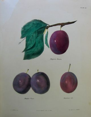 1851 Agriculture Of York,  81 Fruit Color Plates