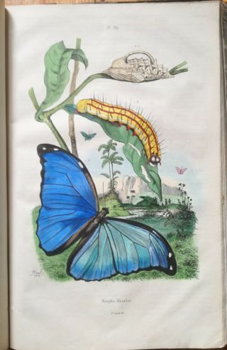 Guerin Natural History Dictionnaire Folio 85 Color Plates T.  5 - 1837