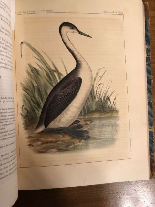1860 Explorations And Surveys; Mississippi To Pacific Ocean Vol 12;