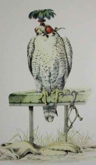 Classic Falcon Hunting Book Falconry In The British Isles